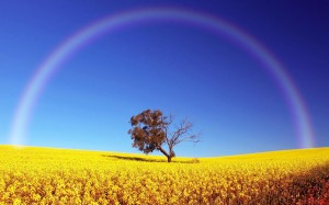 mi arcoiris